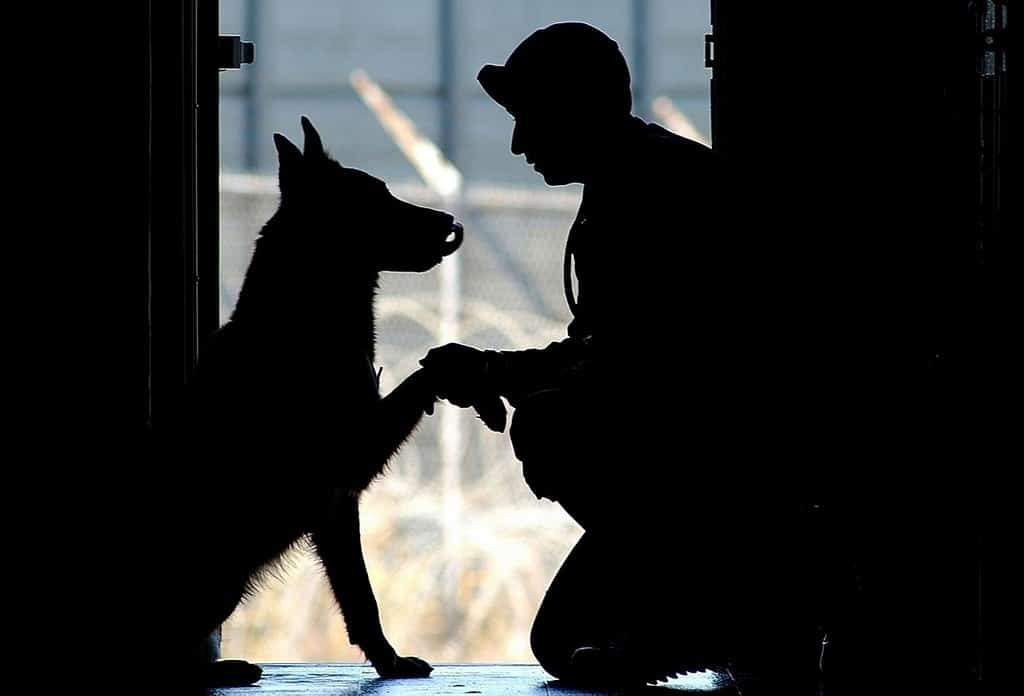 Silhouette of soldier with dog