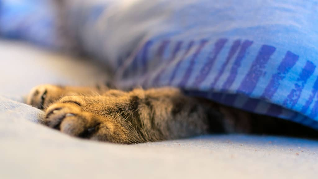 cat paws under covers