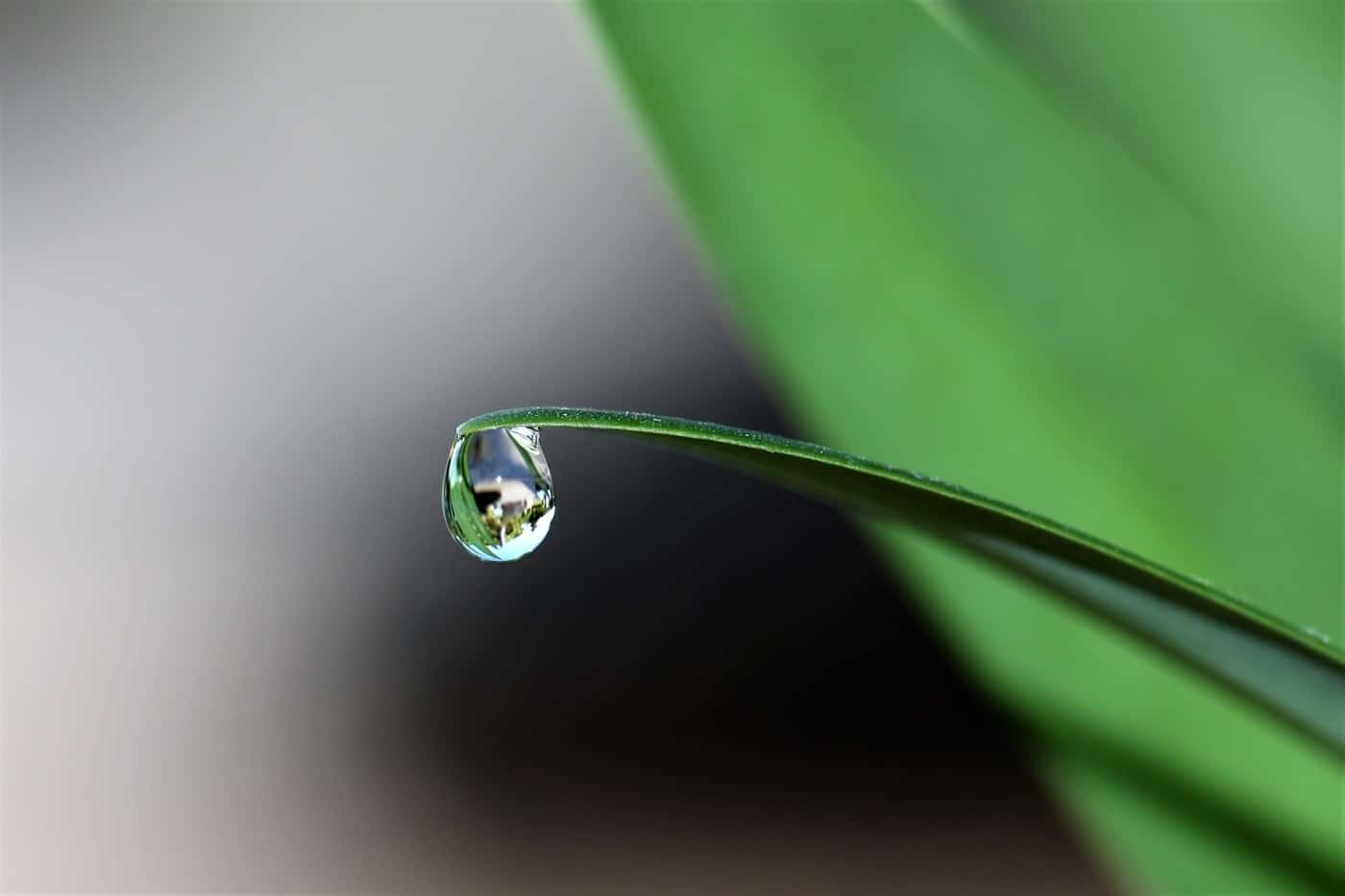 dewdrop on a leaf