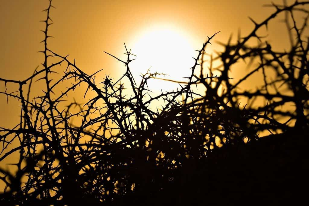 Sun and thorns