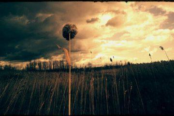 Single flower in cloudy field - Poems by George Payne