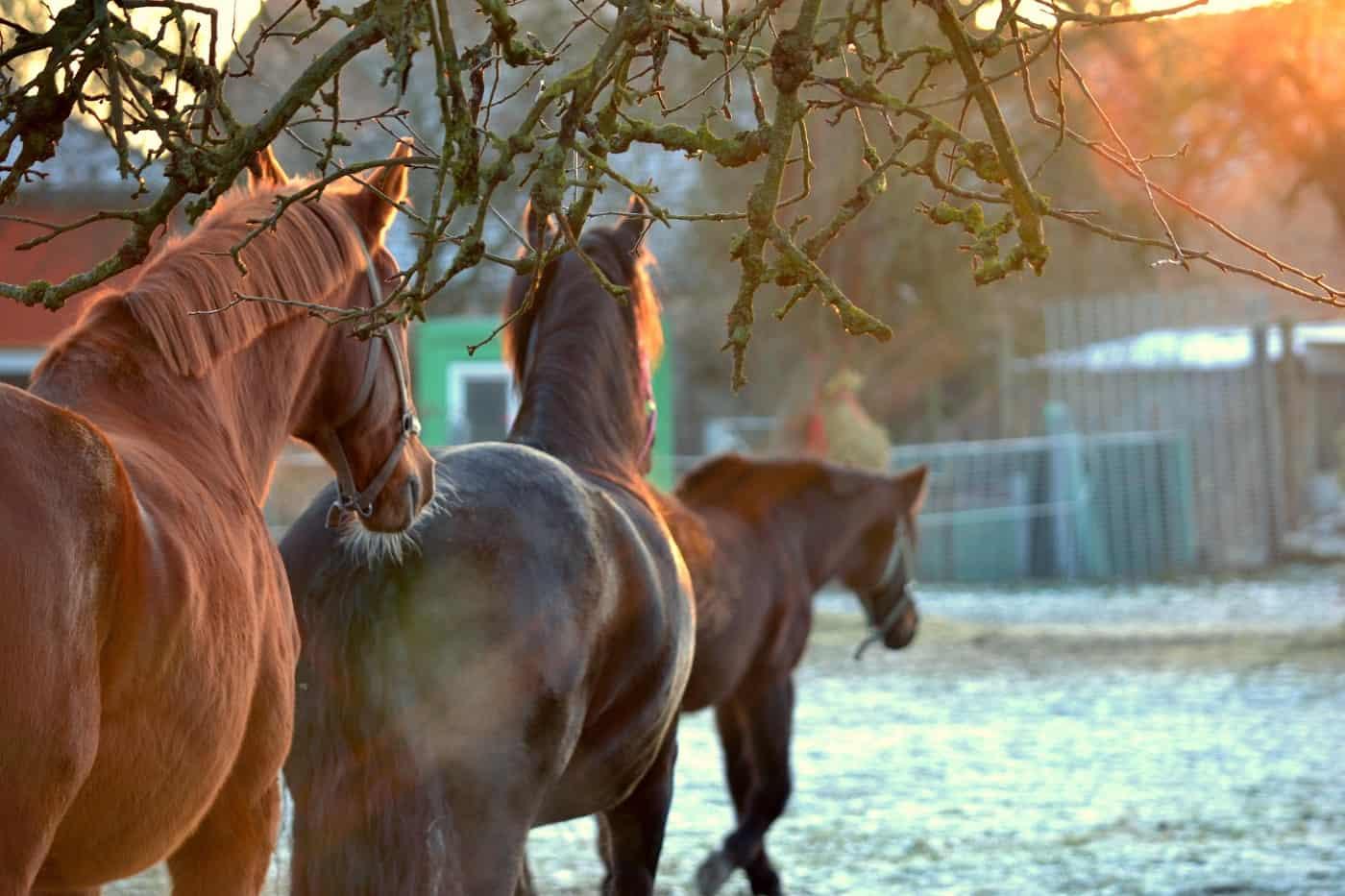 Three brown horses walking in field - Addiction treatment