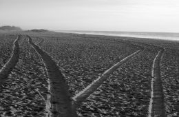 Two paths diverging in sand - When separateness reigns