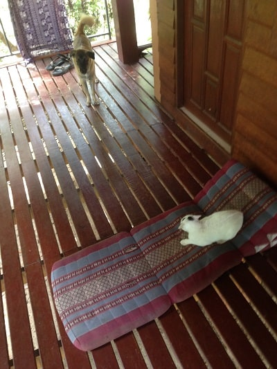 Cat and dog on porch - A guide to Koh Phangan, Thailand