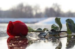 Red rose on ice on snowy day - Poems by B.S. Dixon