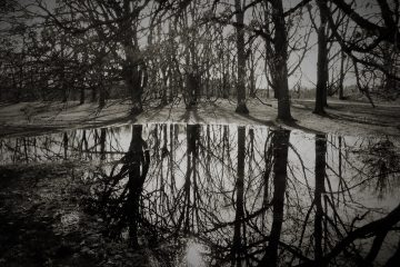 Greyscale scene of trees and large puddle of water - Poems by George Payne