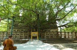 Monk sitting in front of Bodhi tree