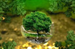 tree in a glass bowl