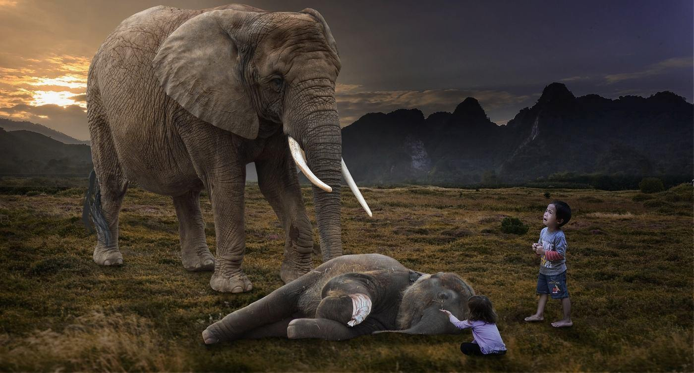 adult elephant with hurt baby and little children